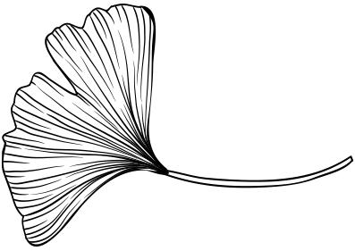 Acupunctuur-Zutphen-Ginkgo blaadjes